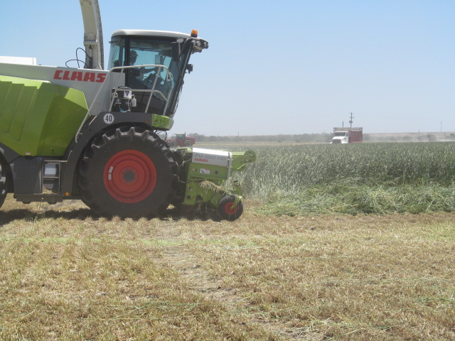 The cutter comes behind the swathed plants and picks them up.