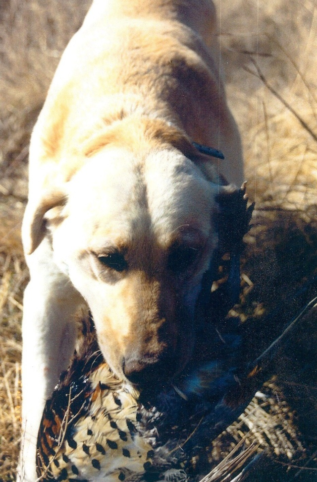 Colt, the hunting dog. Who was weird, but loveable!