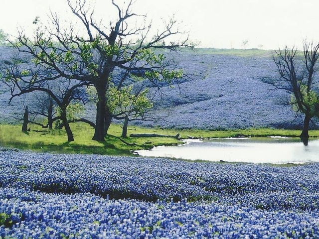 Photo courtesy of Ennis Bluebonnet Trails