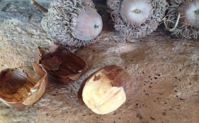 Acorn nut meat that is partially covered in the papery shell. The outer shell is in the upper left side of the pic.