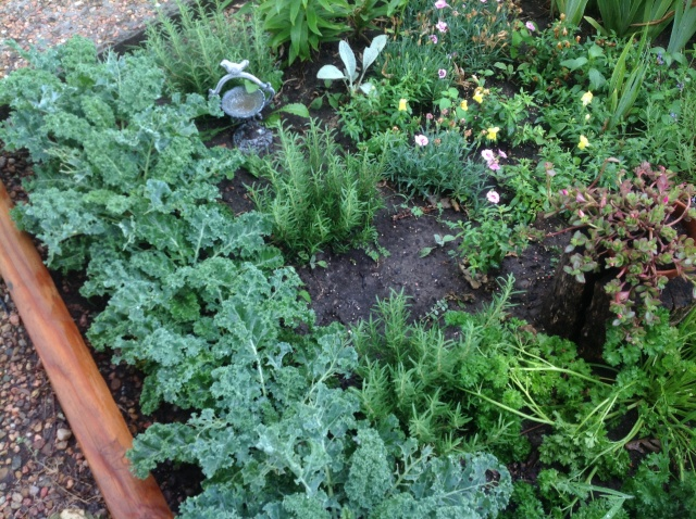 Kale and rosemary