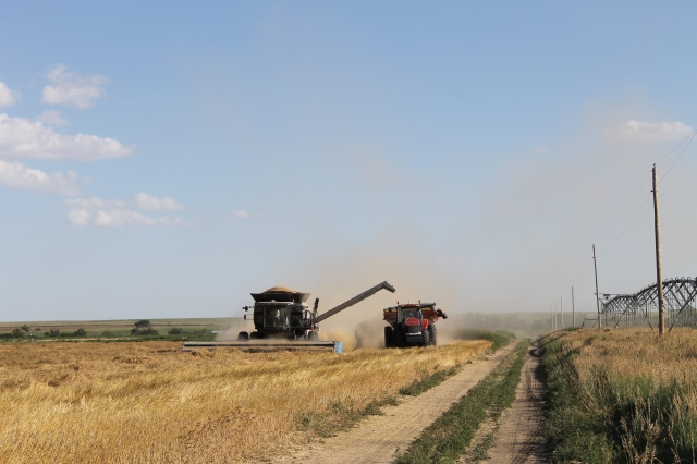 Wheat harvest 2015