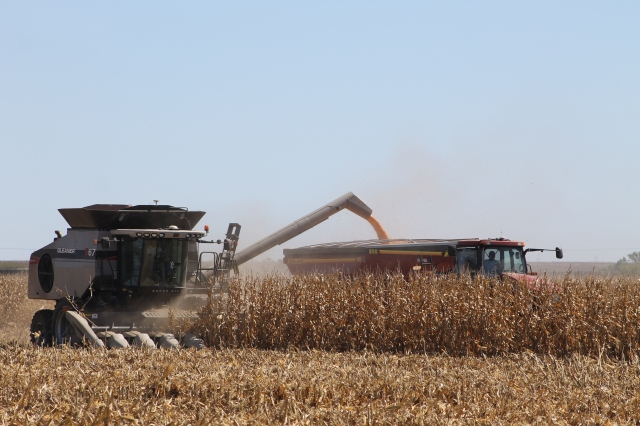 grain corn harvest